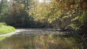 秋天横向 干燥叶子落河水表面上  股票录像