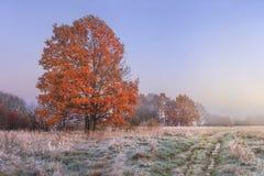 秋天横向 惊人的秋天在11月 早晨秋季自然 有树冰在草和红色叶子的冷的草甸在树 库存照片