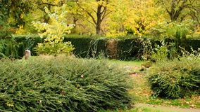 秋天横向 有树和黄色下落的五颜六色的叶子的秋季公园胡同 影视素材