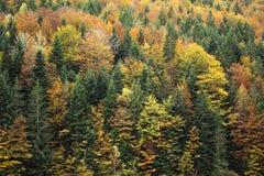 秋天横向 本质的构成 免版税图库摄影