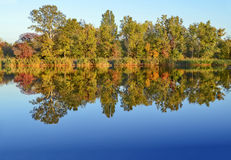 秋天横向 染黄的树临近翼果河 反映在水中 免版税库存照片