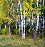 秋天横向 树丛 免版税库存照片