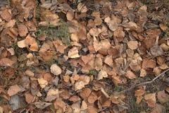 秋天横向 树叶子和针  免版税图库摄影