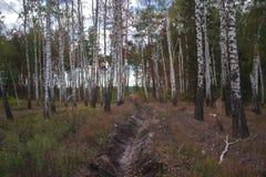 秋天横向 森林在一个晴天 免版税库存图片