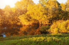 秋天横向 秋天横向 森林在河附近的秋天树日落的 晴朗的秋天风景场面 图库摄影
