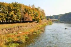 秋天横向 森林河 图库摄影