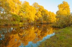 秋天横向 河和被染黄的秋天树沿河日落的 森林秋天风景场面 免版税库存照片