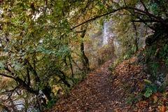 秋天横向 沿树、岩石和峭壁的道路 免版税库存图片