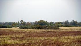 秋天横向 洪泛区和河Berezina 晴天在10月 免版税库存照片