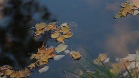 秋天横向 漂浮在河的五颜六色的叶子 影视素材