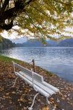 秋天横向 由Bled湖的白色长凳 免版税库存照片