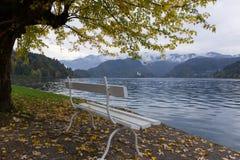 秋天横向 由Bled湖的白色长凳 库存照片