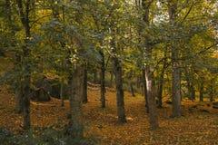 秋天横向 秋天五颜六色的森林 免版税图库摄影