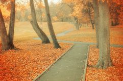 秋天横向 秋天在多云天气的公园胡同 免版税库存图片