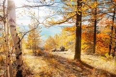 秋天横向 秋天场面 免版税库存图片