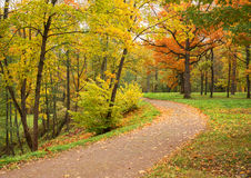 秋天横向 秋天的公园 金黄秋天 库存照片