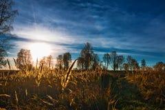 秋天横向 西西伯利亚,俄罗斯 库存照片