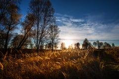 秋天横向 西西伯利亚,俄罗斯 库存图片