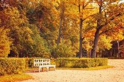 秋天横向 长木凳在秋天公园在被染黄的秋天树下 免版税库存照片