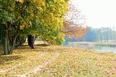 秋天横向 Forest湖 库存照片