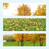 秋天横幅的三张照片背景 秋天树,叶子 库存照片
