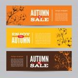 秋天横幅设置了与棉树词根  免版税库存图片