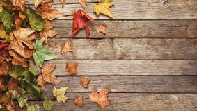 秋天横幅,五颜六色的叶子 免版税库存图片