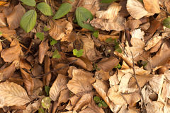 秋天横幅水平的春天万维网 免版税库存照片