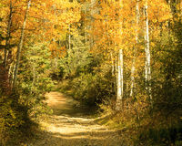秋天横穿 库存图片