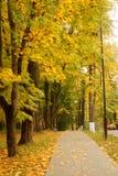 秋天橙树 图库摄影