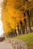 秋天橙树 免版税图库摄影