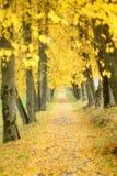 秋天橙树 免版税库存图片