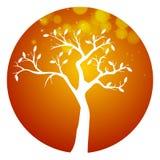 秋天橙色圆的树象 免版税库存照片