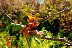 秋天橡木叶子和绿色蕨由早晨太阳点燃了 免版税库存图片