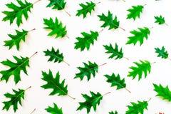 秋天橡木叶子抽象背景  秋天背景特写镜头上色常春藤叶子橙红 免版税库存图片