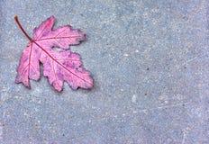 秋天橡木叶子 免版税库存图片