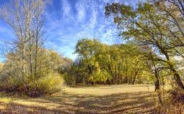 秋天橡木森林 库存图片