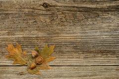 秋天橡木 免版税库存照片