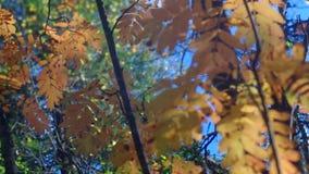 秋天欧洲人森林看法  股票视频