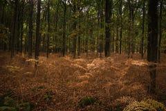 秋天欧洲森林离开橙红结构树黄色 库存图片