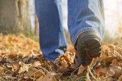 秋天步行在森林里 库存照片