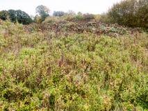 秋天死的后面绿色叶子树篱灌木风景自然 免版税图库摄影