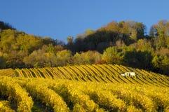 秋天水平的葡萄园 库存照片