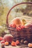 秋天水果和蔬菜在篮子在庭院里 季节 库存照片