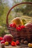 秋天水果和蔬菜在篮子在庭院里 季节 免版税图库摄影