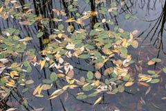 秋天池塘在公园 免版税库存图片