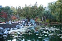 秋天池塘用在日落的清楚的水 免版税库存图片
