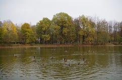 秋天池塘风景 库存照片