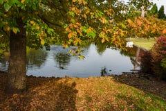 秋天池塘,湖风景 库存图片