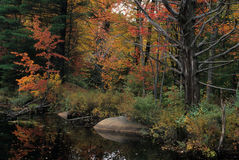秋天池塘-新罕布什尔 库存照片